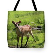Sika Deer Water Hole Omagh Tote Bag