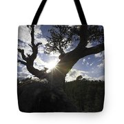 Silhouette Of A Gnarled Tree Tote Bag