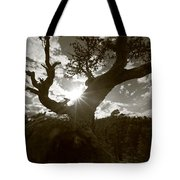 Silhouette Of A Gnarled Tree - Sepia Tote Bag
