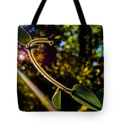 Silhouette Of Climbing Vine On A Sunny Afternoon Tote Bag