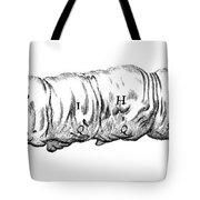 Silkworm, Malpighi, 1686 Tote Bag