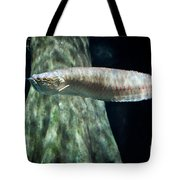 Silver Arowana Fish In Paludarium Tote Bag