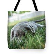 Silver Labrador Retriever  Tote Bag