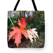 Silver Maple In Red Tote Bag