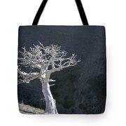Silver Tree Glacier Park Montana Tote Bag