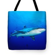 Silvertip Shark In Thailand Tote Bag