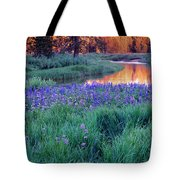 Silvery Lupine Tote Bag