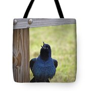 Singing Grackle Tote Bag