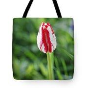 Single Lovely Tulip Tote Bag