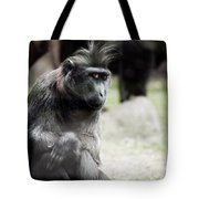 Single Macaque Monkey Sitting Tote Bag