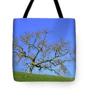 Single Oak Tree Tote Bag