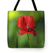 Single Poppy On Green Background Tote Bag