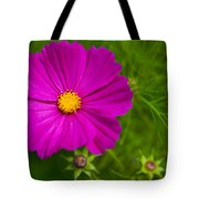 Single Purple Cosmos Flower Tote Bag