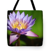 Single Purple Water Lily Number One Tote Bag