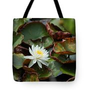 Single Water Lilly  Tote Bag