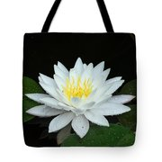 Single While Water Lily On Black Background Tote Bag
