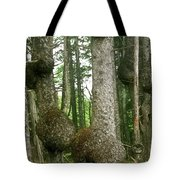 Sitka Spruce Burls On The Olympic Coast Olympic National Park Wa Tote Bag by Christine Till