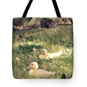 Sitting Ducks Tote Bag