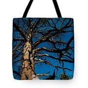 Sitting In Tree 2 Tote Bag by Scott Sawyer