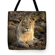 Sitting Majestically Tote Bag