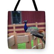 Sitting Peacock Tote Bag