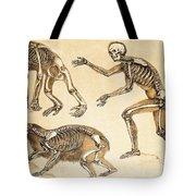 Skeletons Of Man, Ape, Bear, 1860 Tote Bag