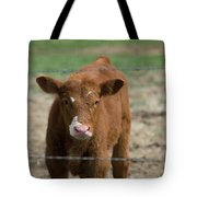 Skeptical Calf Barbed Wire Tote Bag