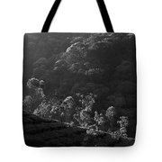 Skn 6707 Tree Parade. B/w Tote Bag