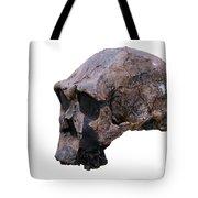 Skull Of Homo Erectus Tote Bag