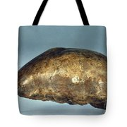 Skull Of Java Man Tote Bag