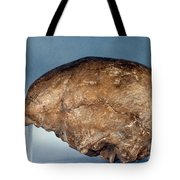 Skull Of Peking Man Tote Bag