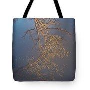 Sky Above Me, Water Below Me, Life Surrounds Me. Tote Bag by Viviana Nadowski