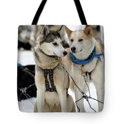 Sled Dogs Tote Bag by David Buhler