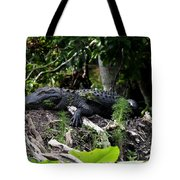 Sleeping Alligator Tote Bag