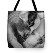 Sleeping Baby, Black And White Tote Bag