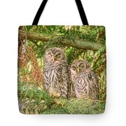 Sleeping Barred Owlets Tote Bag
