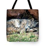 Sleeping Bobcat Tote Bag