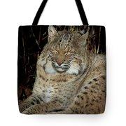 Sleepy Bobcat Tote Bag
