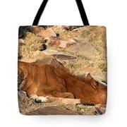 Sleeping Colt Tote Bag