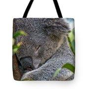 Sleeping Koala - Canberra - Australia Tote Bag
