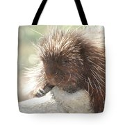 Sleeping Porcupine On A Fallen Branch Tote Bag