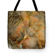 Sleeping Robins Tote Bag