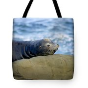 Sleeping Sea Lion Tote Bag