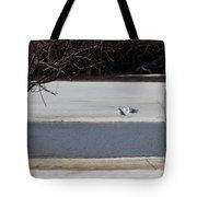 Sleeping Seagulls Tote Bag