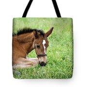 Sleepy Foal Tote Bag