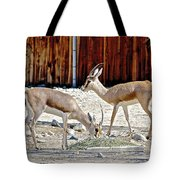 Slender-horned Gazelles In Living Desert Zoo And Gardens In Palm Desert-california Tote Bag