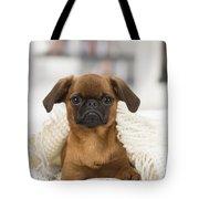 Small Brabant Griffon, Petit Brabancon, Dog  Tote Bag