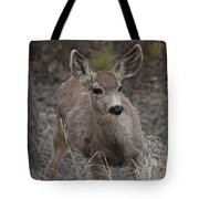 Small Fawn In Tombstone Tote Bag