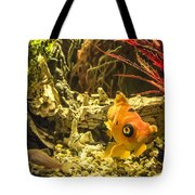 Small Fish In An Aquarium Tote Bag