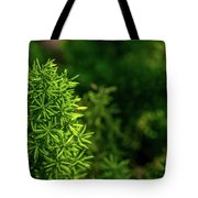 Small Plants Tote Bag